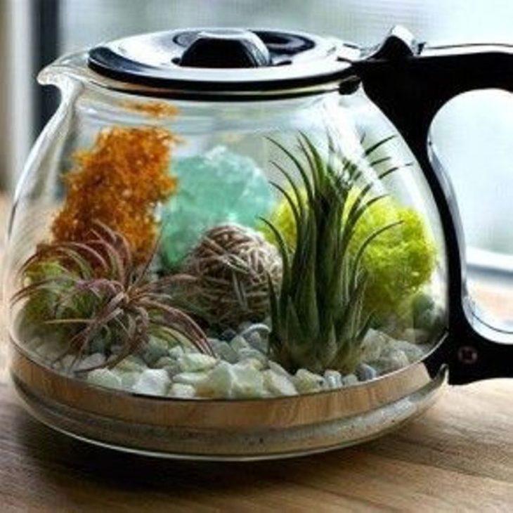 аквариум в чайнике