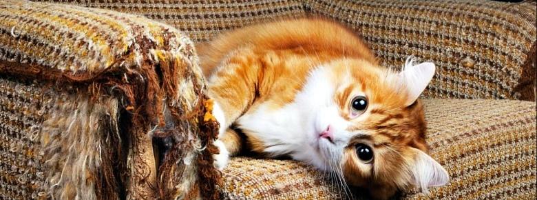 6 способов отучить кота драть мебель
