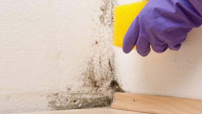Нанесите с помощью губки или щетки на пораженные плесенью места