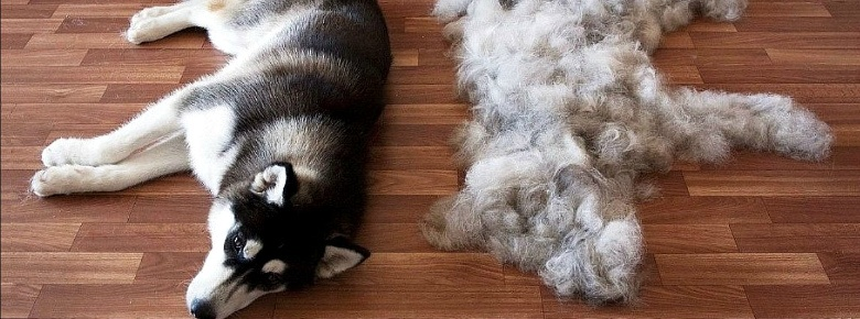 Как легко и просто избавиться от шерсти собаки в доме