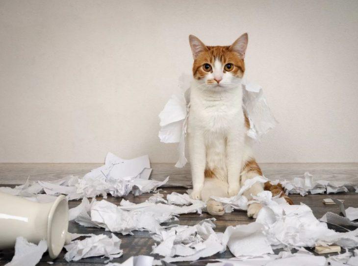 Наполнители для кошачьего и собачьего туалета своими руками