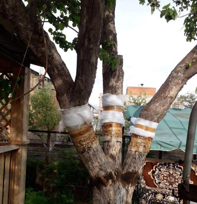 Как избавиться от муравьев в саду с помощью старого пуховика